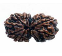 Gorishankar rudraksh l