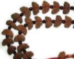 1 mukhi rudraksh mala 1 face rudraksh mala 21 beads