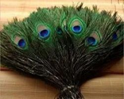 Peacock feathers bunch morpankh set of 25