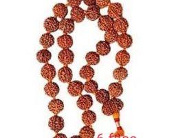 6 face rudraksh mala  6 mukhi rudraksha mala 36 beads