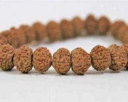 8 face rudraksh bracelet 8 mukhi rudraksh bracelet