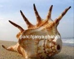 Panchjanya shankh
