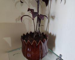 Ceramic pot por indoor plants brown colour ceramic pot