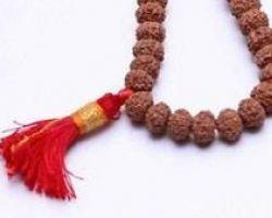 8 mukhi Rudraksha mala 8 face rudraksh mala 11 beads