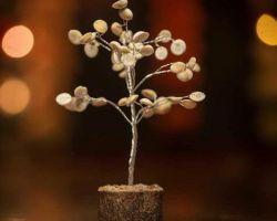 Gomati chakra tree real gomati chakra tree small size