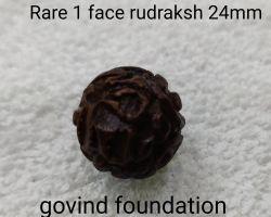 1 mukhi rudraksha Rare 1face rudraksha one face rudraksh round 24mm
