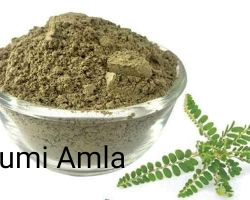 Bhumi Amla powder 200gm
