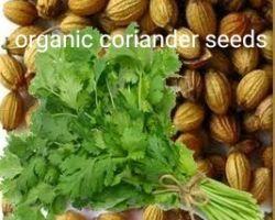 Coriander seeds organic farming seeds dhaniya beez 250gm
